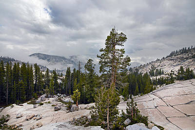 Photograph - Yosemite National Park by Carol M Highsmith