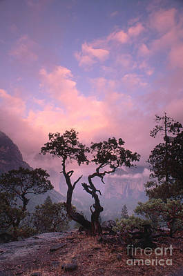 Photograph - Yosemite National Park by George Ranalli
