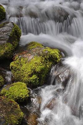 Photograph - Yosemite Np Fern Springs 06 by Jeff Brunton
