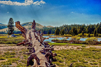Photograph - Yosemite Tuolumne Meadows by Bob and Nadine Johnston