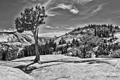 Photograph - Yosemite Tree Wispy Clouds Black And White by Blake Richards