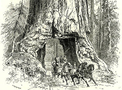 Yosemite Drawing - Yosemite Valley Wawona 1891 Usa by English School