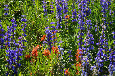Photograph - Yosemite Wildflowers by Lynn Bauer