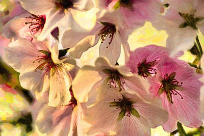 Photograph - Yoshino Cherry Blossoms by Mark E Tisdale