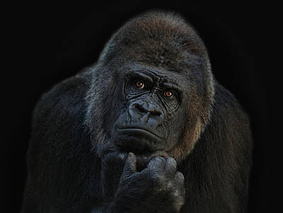 Gorillas Photograph - You Ain T Seen Nothing Yet by Joachim G Pinkawa