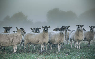 Sheep Photograph - You And Ewes Army? by Chris Fletcher