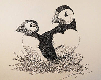 Puffin Drawing - You And Me by Saundra Smoker
