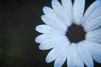 Daisies Digital Art - You Answered My Cry by Laurie Search