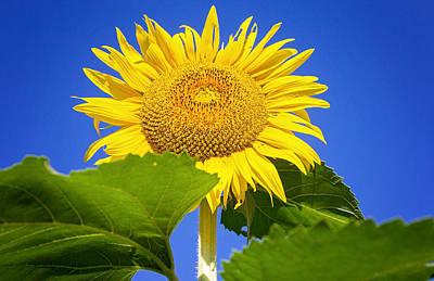 Photograph - You Are My Sunshine by Deb Buchanan