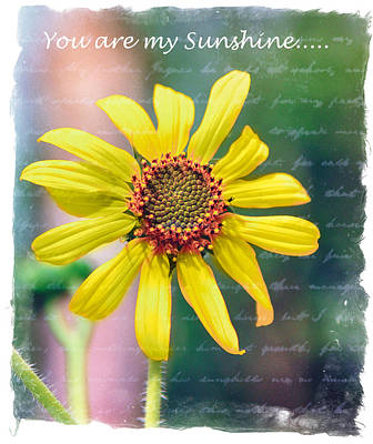 Photograph - You Are My Sunshine by Diane Wood