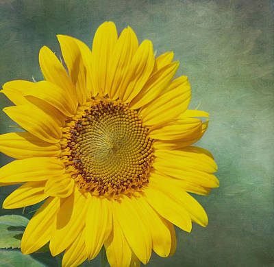 You Are My Sunshine Print by Kim Hojnacki