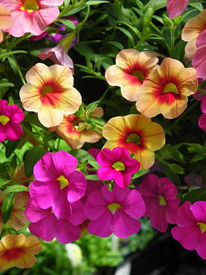 Photograph - You Asked For Petunias by Georgia Hamlin