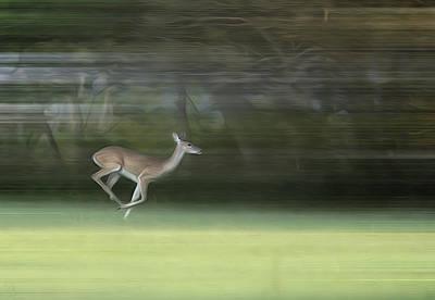 You Better Run Through The Jungle Art Print by Hazel Billingsley