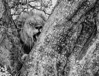 Animal Portraits - You cant see me 3 mono by Alistair Lyne