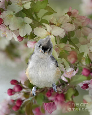 Titmouse Photograph - You Gotta Love Me by Betty LaRue