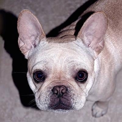 Bullie Photograph - You Had Me At Hello by Donna Proctor