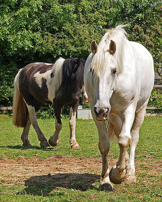 Photograph - You Lead I'll Follow - Horse Friends by Gill Billington