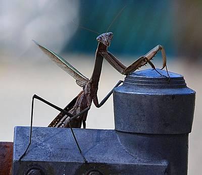 You Looking At Me - Pray Mantis Art Print