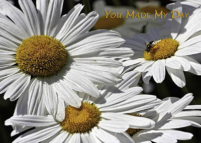 Photograph - You Made My Day - Daisies by Dawn Currie