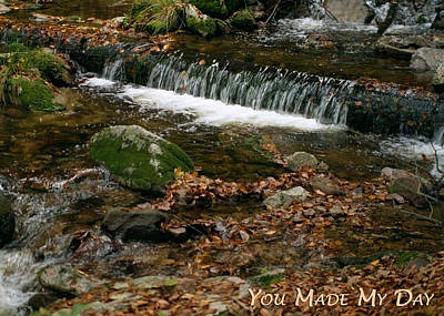 Photograph - You Made My Day - Stream by Dawn Currie