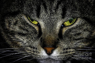 Gray Tabby Photograph - You May Leave Now by Mitch Shindelbower