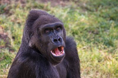 You Talkin' To Me? - Gorilla Chat Art Print