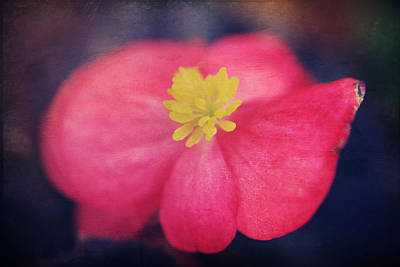 Pink Flower Digital Art - You Touch My Soul by Laurie Search