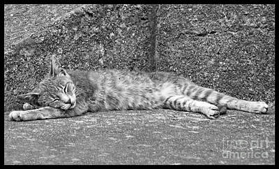 Photograph - Young Alley Cat Sleeping by Menega Sabidussi
