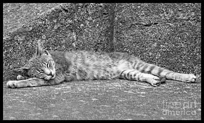 Photograph - Young Alley Cat Sleeping by Menega Sabidussi