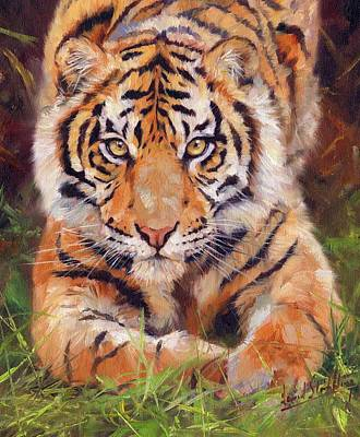 Young Amur Tiger Art Print by David Stribbling