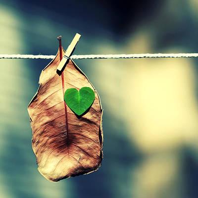Falltime Photograph - Young At Heart. by Beata  Czyzowska Young