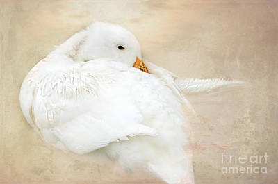 Photograph - Young Baby Duck by Peggy Franz