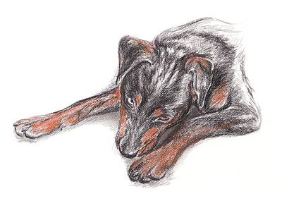 Drawing - Young Black Dog Portrait by MM Anderson