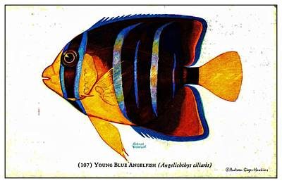 Digital Art - Young Blue Angelfish 1932 Vintage Postcard by Audreen Gieger