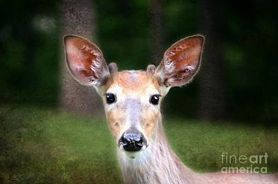Photograph - Young Buck A Roo Deer by Peggy Franz
