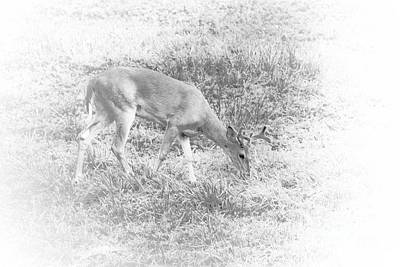 Art Print featuring the photograph Young Buck by Jim Lepard