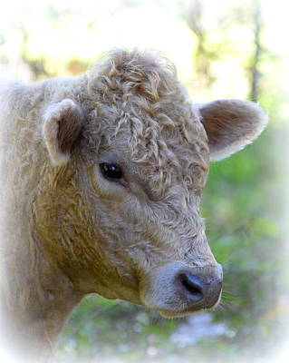 Photograph - Young Bull 1 by Sheri McLeroy