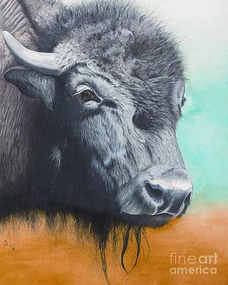 Drawing - Young Bull by Rosellen Westerhoff