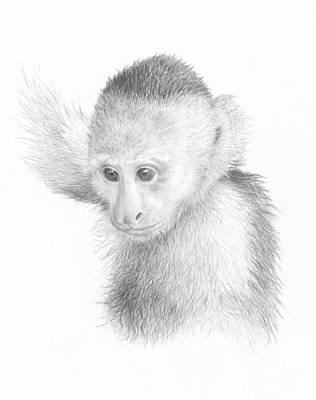 Young Capuchin Art Print