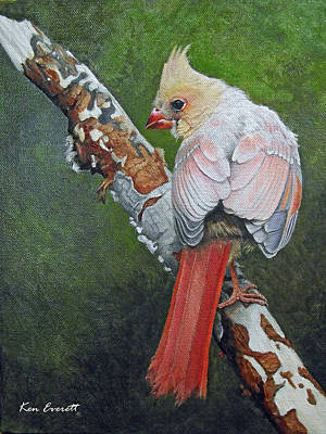 Young Cardinal  Art Print by Ken Everett