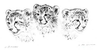 Cheetah Drawing - Young Cheetahs by Kurt Tessmann