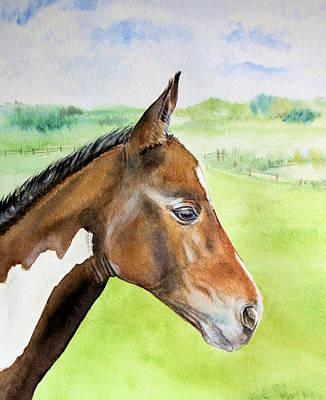 Young Cob Art Print by Elizabeth Lock