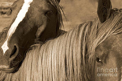 Pucker Up - Young Colts by J L Woody Wooden