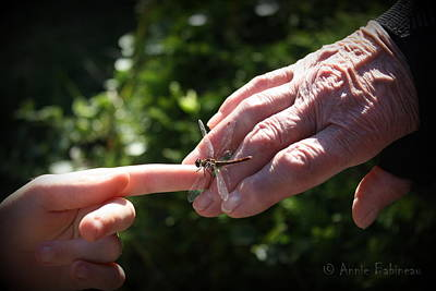 Photograph - Young Dragonfly Whisperer by Annie Babineau
