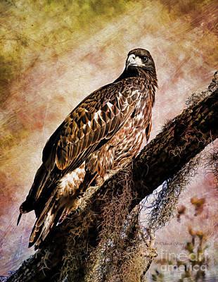 Young Eagle Pose II Art Print by Deborah Benoit