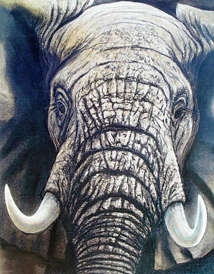 Painting - Young Elephant Portrait by David Clode