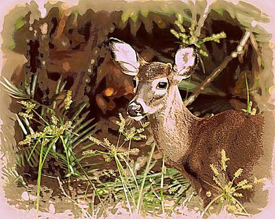 Photograph - Young Fall Buck  by Sheri McLeroy