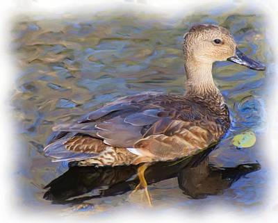 Photograph - Young Female Mallard by Sheri McLeroy
