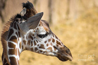 Photograph - Young Giraffe by Imagery by Charly