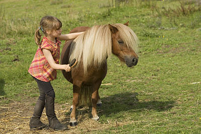 Pet Care Photograph - Young Girl Grooming Shetland Pony by Jean-Michel Labat